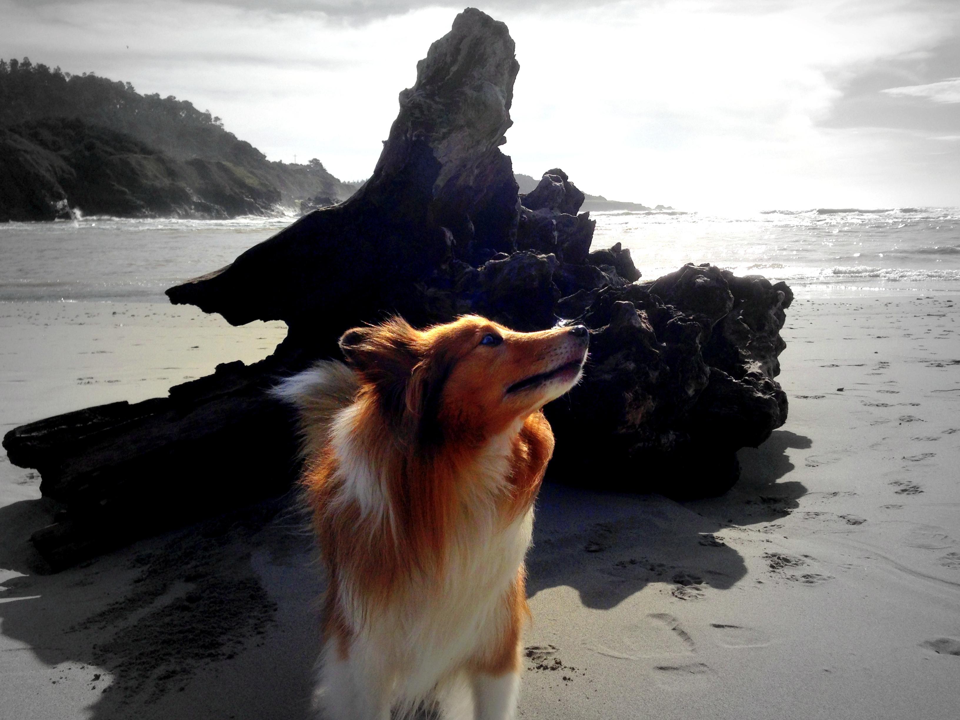 本日の癒し犬vol.36
