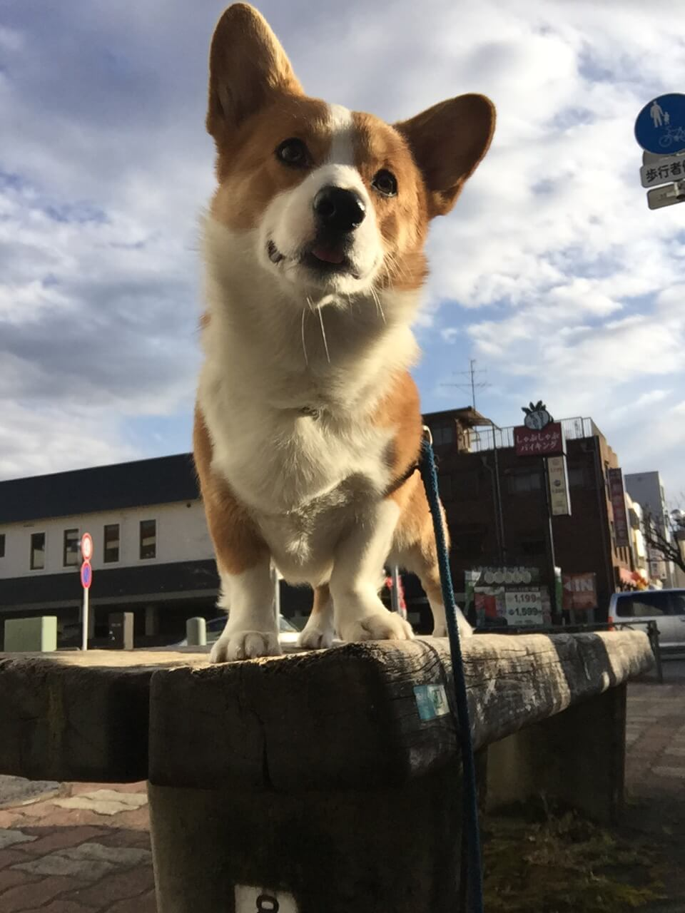 本日の癒し犬vol.142