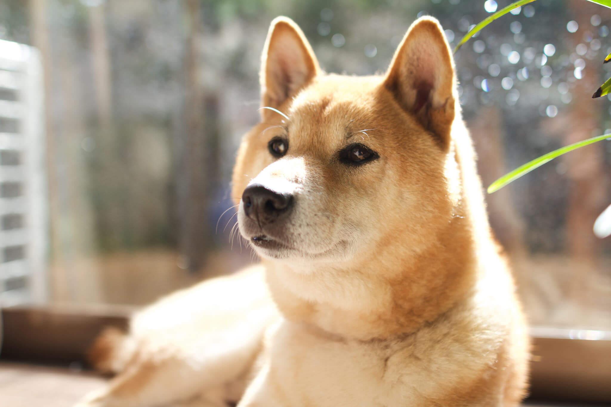 本日の癒し犬vol.154
